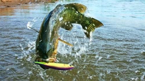 21093 Ловля рыбы толкование сонника