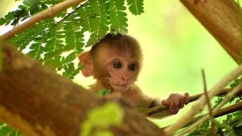 Маленькая обезьянка толкование сонника