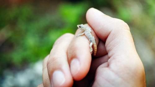 Маленькая ящерица толкование сонника