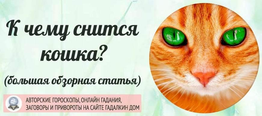 Сонник: к чему снятся кошки во сне женщине или мужчине — обзор 22 классических сонников