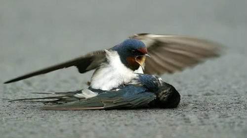 21896 Мертвая сова толкование сонника