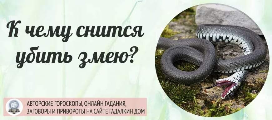22036 К чему снится убить змею: толкование значения сна для женщин и мужчин