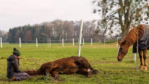 22936 К чему снится мертвая лошадь